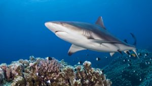 3 Things Advertisers Can Learn From Shark Week