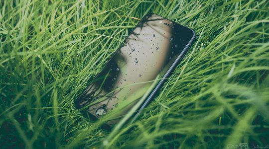 A mobile phone in grass; or, the app ecosystem.